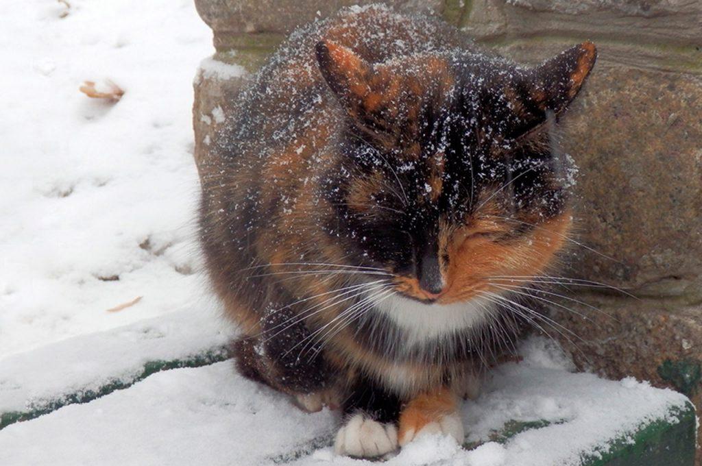 خواب گربه بیرون از خانه در زمستان
