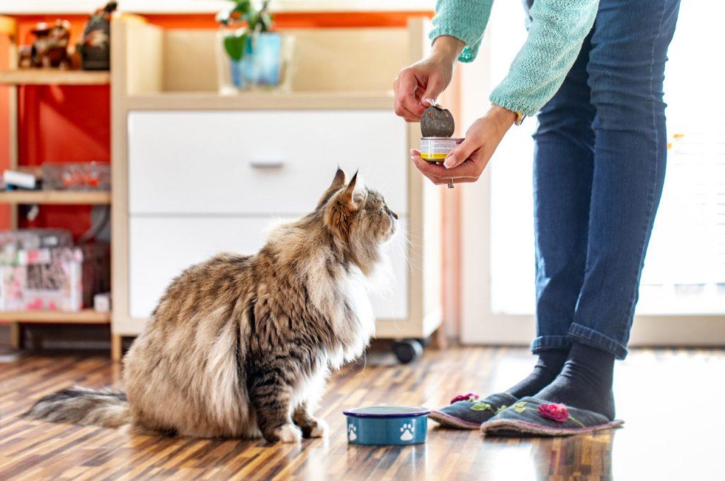غذای تر گربه
