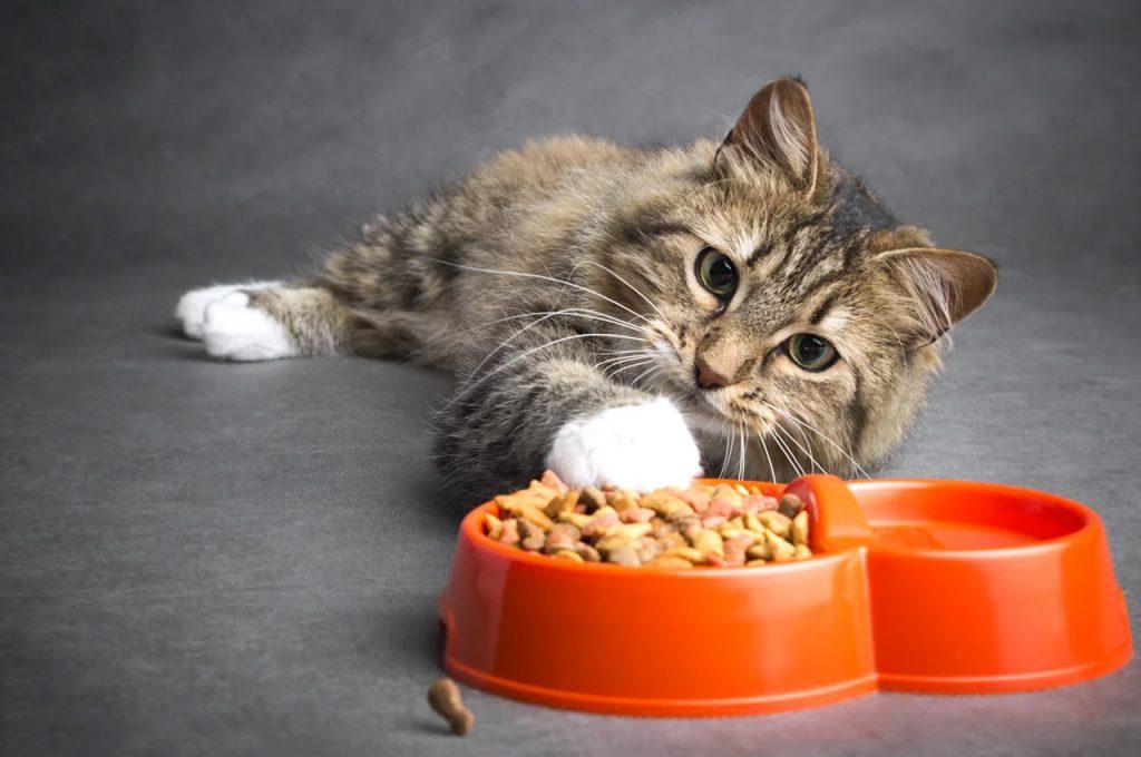 غذای گربه سالخورده
