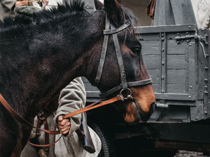 افسار اسب