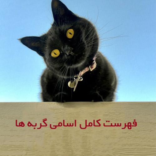 فهرست اسامی گربه ها