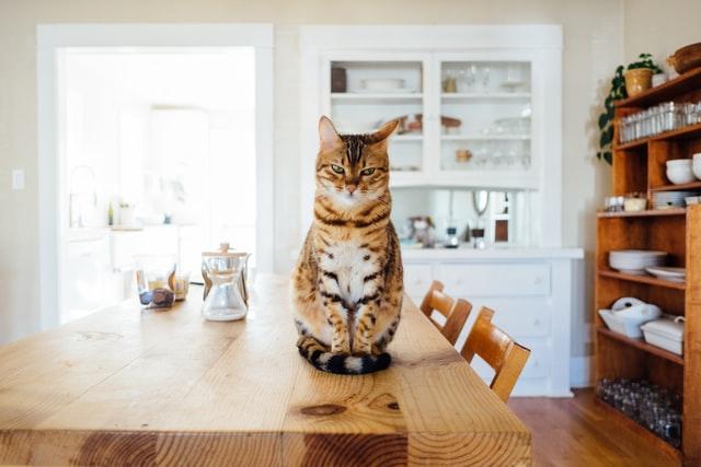 گربه روی میز