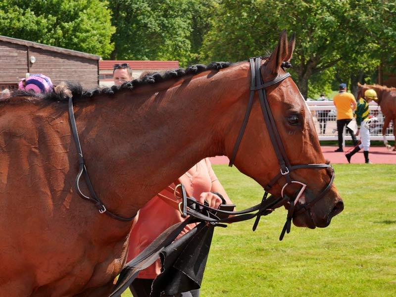 تجهیزات اسب